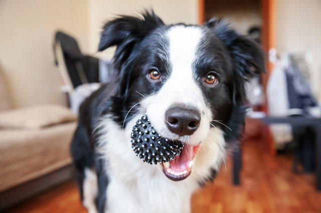 Eight of the best products to treat your new dog