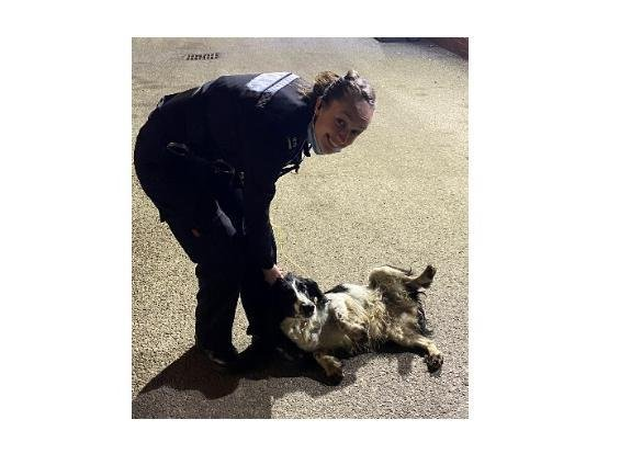 Officers rescued Lupin, a springer spaniel, after police united across three counties to track him down in the late-night 999 drama.