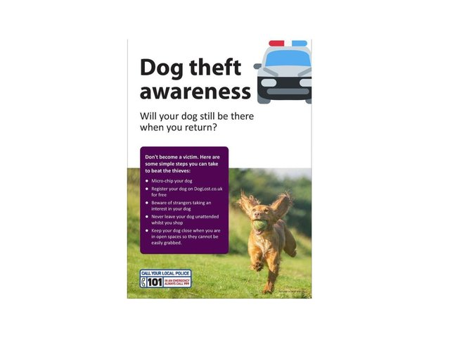 """Police are tracking down a red car after the driver was suspected of """"paying interest in a dog"""" in Market Harborough over the weekend."""