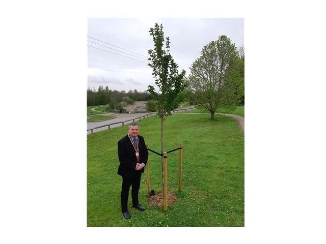 Cllr Neil Bannister, Harborough council's vice chairman, with one of the new cherry trees.